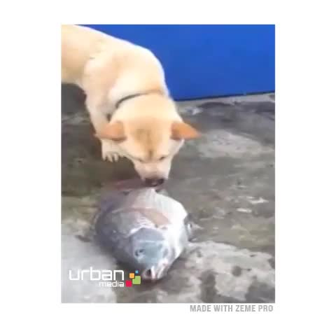 Funny Viness post on Vine - This dog has a bigger heart than half the people I know! - Funny Viness post on Vine