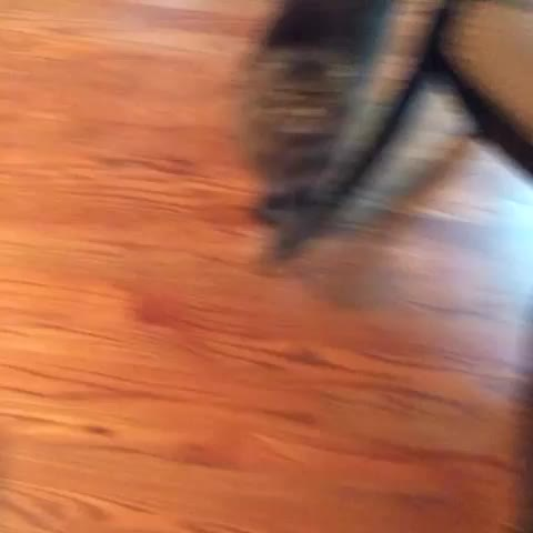 Blake Welchs post on Vine - YASS BETCH YASS!!! #cats #funnycats #yass #treat #funny - Blake Welchs post on Vine