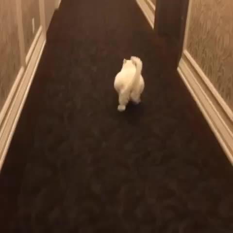Piquess post on Vine - Vine by Piques - Worlds Laziest Cat