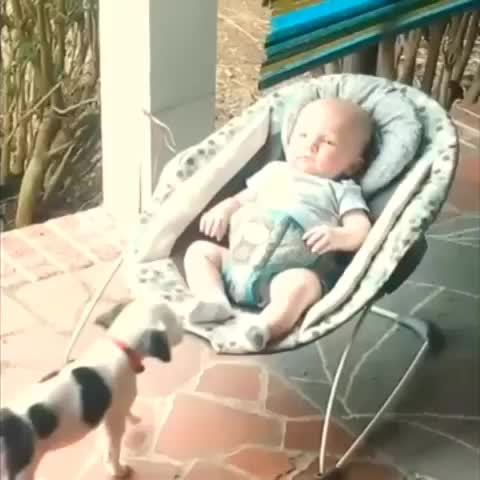 A babys bestfriend - Robert Terrell Hayess post on Vine