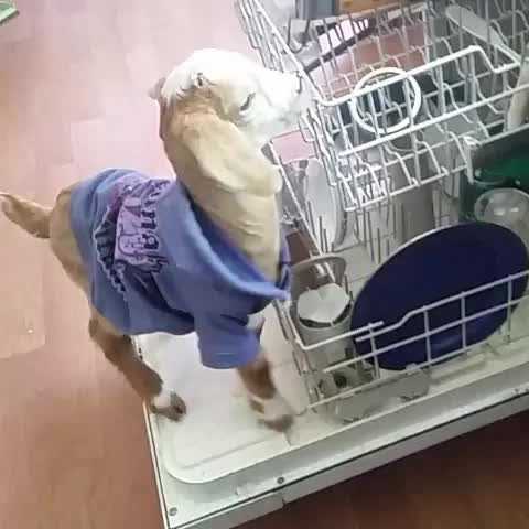 Me doing the dishes - Vine by Purity - Me doing the dishes