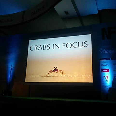 Vine by Manish Pandey - #Crabs in #Focus #NatureInFocus @nature_InFocus #Nature & #Wildlife by Adarsh & Radha
