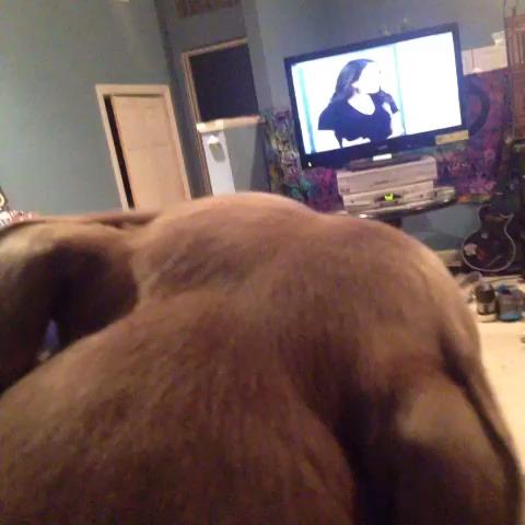 Best Animal Viness post on Vine - Dog Watching T.V. Be Like🙊 Created By rachaellllllll - Best Viness post on Vine