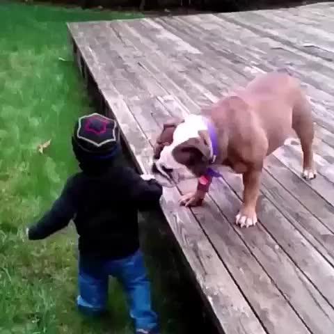 este perro es el puto amo d la lucha libre xdddd - Vine by Yisucrist - este perro es el puto amo d la lucha libre xdddd