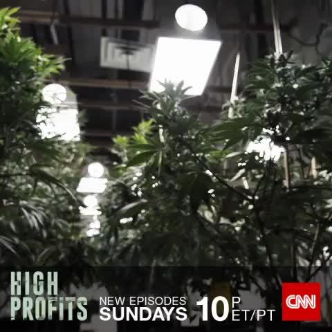 Vine by CNN - Would you want his job? Explore the legal marijuana industry on the new CNN Original Series #HighProfits. Learn more at CNN.com/highprofits