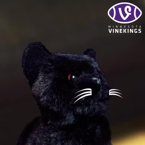 Vine by Minnesota Vikings - Here kitty, kitty. #Vinekings #MINvsCAR
