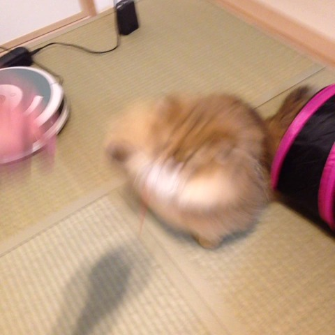 ふーちゃん(foochan)s post on Vine - #foochan #cat #meow #animal - ふーちゃん(foochan)s post on Vine