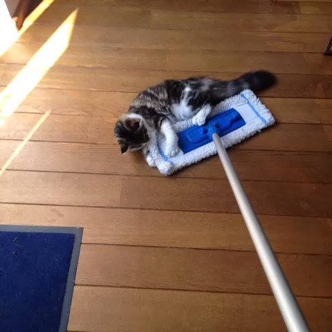 Chrissy & Caya on the Swiffer. - Chrissy & Caya on the Swiffer. - Geert-Jan Smitss post on Vine