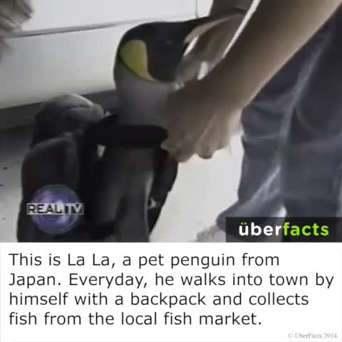 UberFactss post on Vine - #UberFacts - UberFactss post on Vine