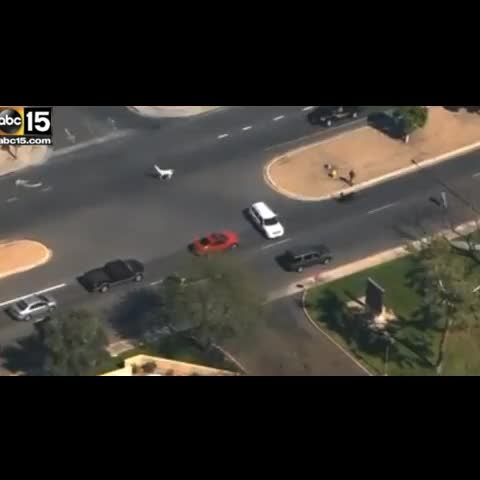 Vine by Jim Dalrymple II - The Great Arizona Llama chase of 2015, via ABC 15