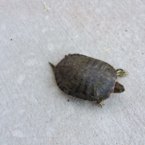 Bethos post on Vine - This turtle needs to go down in history as the fastest turtle in the world #amazing 🐢💨🏆 - Bethos post on Vine