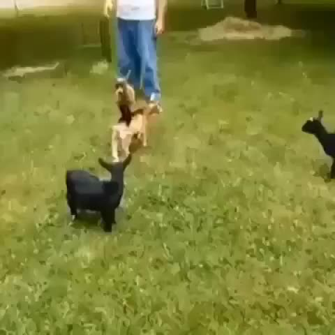 Vine by Animal Vines - That Poor Guy! ????
