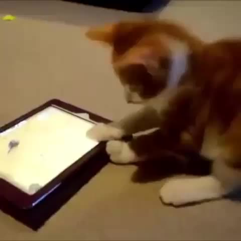 Vine by Lele Pons - Cat Playing MouseCatch Game!????????