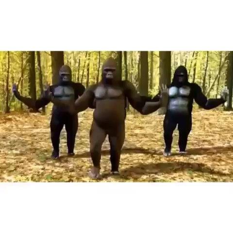 Dylan LaPorts post on Vine - Vine by Dylan LaPort - Im so fancy. #gorilla #fancy #dancing #hi