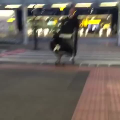 Vine by Shane Long - What a welcome home! Its been an amazing 5 weeks, but missed these little beauties!