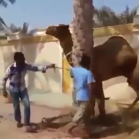 Mr.QASiMs post on Vine - Drophead 🔪🐪 V/O Pagekennedy - Mr.QASiMs post on Vine