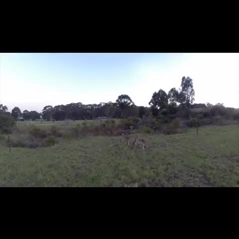 OMG! A drone captures the moment a kangaroo hits the quadcopter out of the sky -- 3 of 3 -- (Source: YouTube/Newzulu) - Vine by BuzzFeed News - OMG! A drone captures the moment a kangaroo hits the quadcopter out of the sky -- 3 of 3 -- (Source: YouTube/Newzulu)