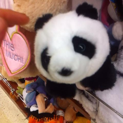 evdekiadam – İçimdeki panda aşkı bambaşka. izle