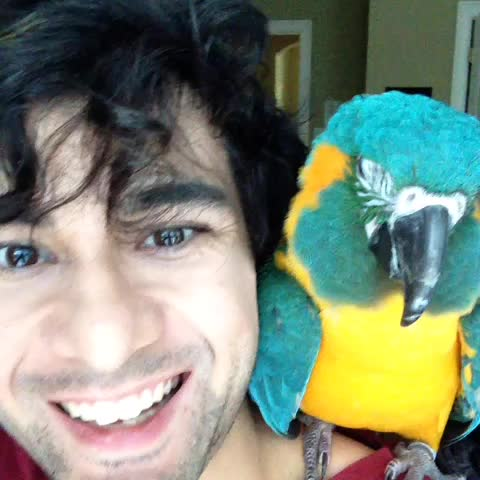 #ChrisAndTango want YOU to vote. If youre 18+ register at OurTime.org! v34 #macaws #parrots #cuteanimals Our Time - IG: @ChrisKrxsss post on Vine