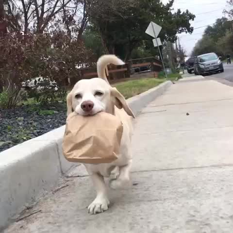 Vine by Random Guy - If youre having a bad day just watch this dog delivering tacos