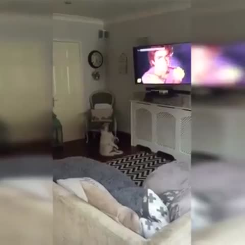 Watch puppy planet 39 s vine when your favorite tv show - Your favorite show ...
