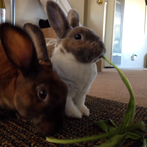 Ricardo Vigils post on Vine - #bunny #ladyandthettramp - Ricardo Vigils post on Vine
