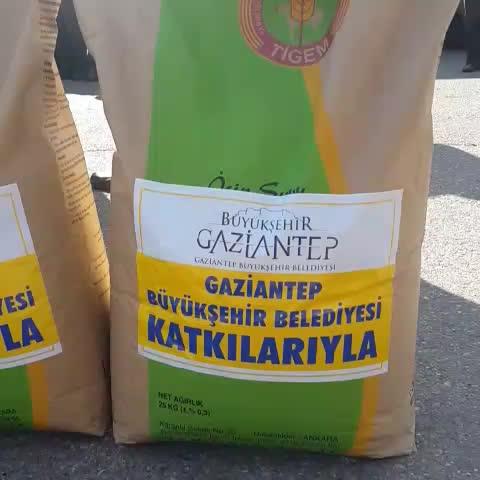 FatmaSahins post on Vine - Gaziantep Büyükşehir Belediyesi olarak Türkiyede bir ilki yapıyoruz. Çiftçilerimize tohumluk buğday dağıtıyoruz. - FatmaSahins post on Vine