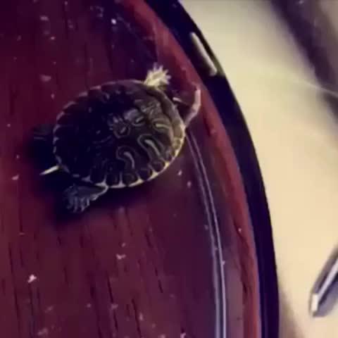 Vine by okay stephen pendleton - yep, this turtle dabbed 🐢🔥 (ib: viral shark )