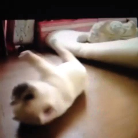Cute puppy#cute #funnyDog #funny #funnyanimals - Funny Animalss post on Vine