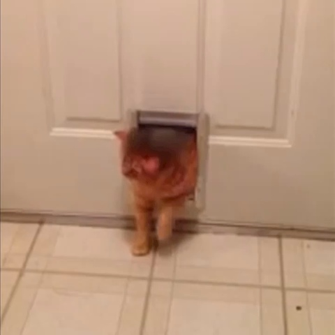Vine by Hombre_Zombie - Chubby cat!