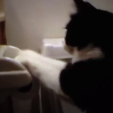 This cat is rollin... the toilet paper roll