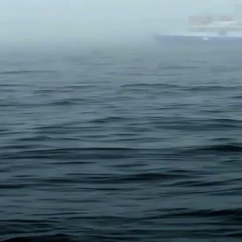 Turistas graban el salto de una ballena jorobada en un paseo cerca de la isla Brier.  #Canada #Nature #Amazing - Vine by teleSURtv - Turistas graban el salto de una ballena jorobada en un paseo cerca de la isla Brier.  #Canada #Nature #Amazing