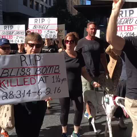 Vine by Patrick Williams - Brisbane #marchforthemurderedmillion participants remember greyhounds no longer with us ABC News