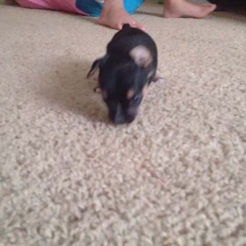 Vine by Alissa McKinnon - I never knew I could love until I met a 3 legged puppy.