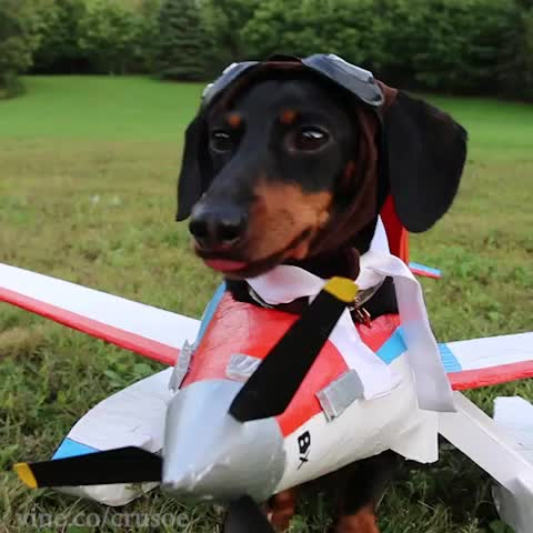 Funny Hot Dog Photos