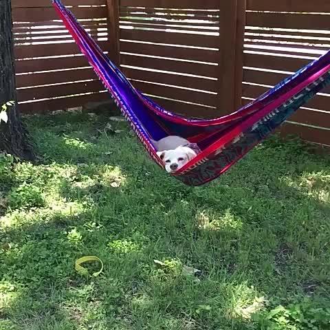 Vine by Yisucrist - mi objetivo en la puta bida es estar tan relajado komo este perro