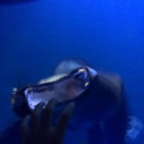 Edward Kims post on Vine - The sea lion is trying to eat my hand... #aquarium #sealion - Edward Kims post on Vine