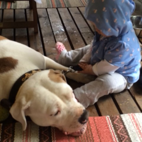 Steffen margera Jensens post on Vine - Here is another one where the #vicious #pitbull #attacks with #kisses and #love #judgethedeednotthebreed - Steffen margera Jensens post on Vine