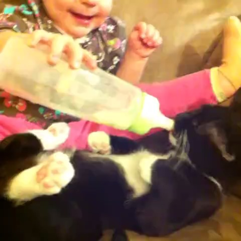 Vine by Best Vines - How Cute Is This!????? Vine by jimi g