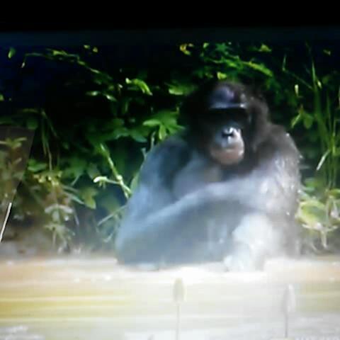 Davar – Dini bütün evrim hayvanı Tayfun Yılmaz izle