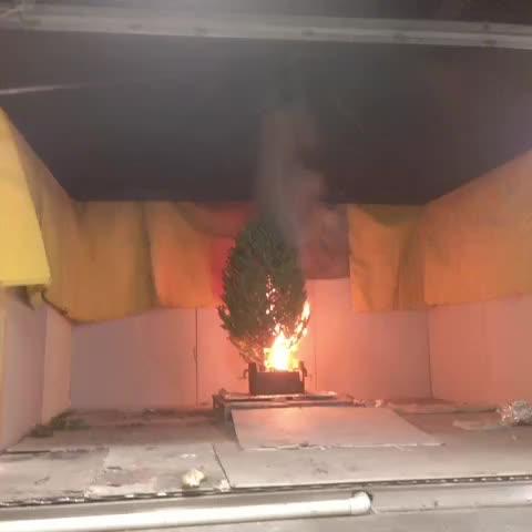 Dry #xmas trees burn quickly! - Vine by U-Md. Clark School - Dry #xmas trees burn quickly!