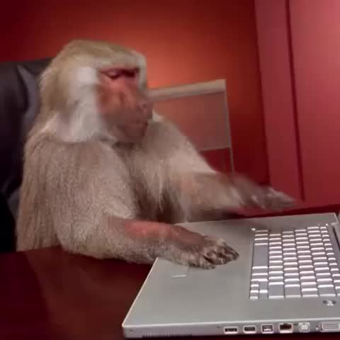 Vine by TheQueerGuy - When the wifi doesnt work. #comedy #funny #animals #baboon #monkey #monkeys #funnyvines #vineoftheday