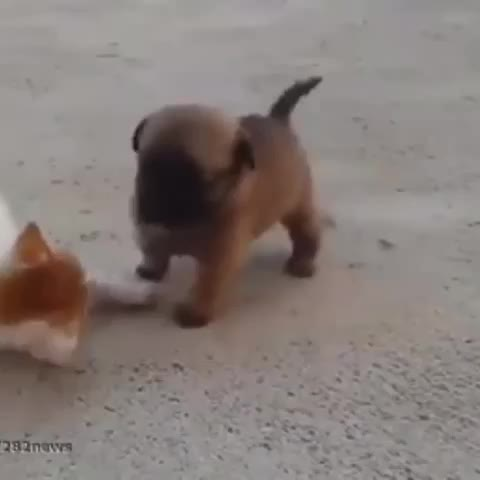 When you are angry but she wants to hug and kiss #animals #catvine #dogvine #catanddog #love #canadavines credit to 9GAG #catlife #DogLife - Vine by Desi Canadians - When you are angry but she wants to hug and kiss #animals #catvine #dogvine #catanddog #love #canadavines credit to 9GAG #catlife #DogLife