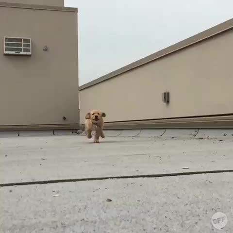 Vine by BuzzFeed BFF - SLOW MOTION PUPPY