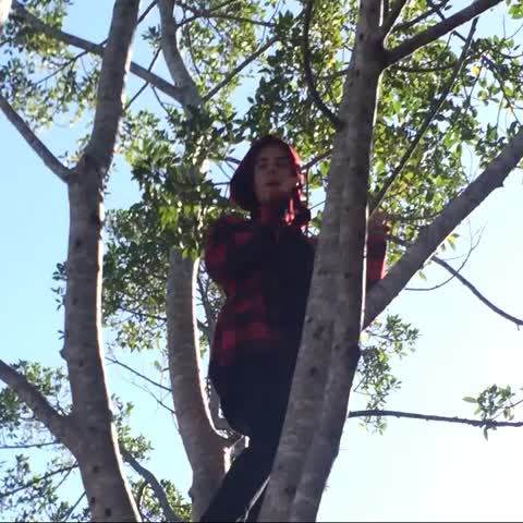 Vine by sexualnacks - HE STARTED SINGING BABY IN THE TREE WITH US