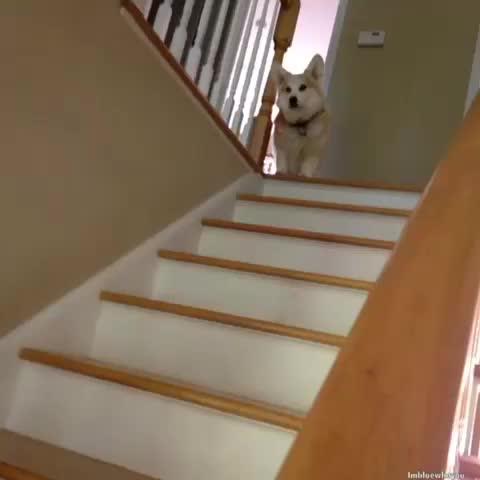 When yur dog waka af #wakaflocka #bow Nothing But Chloe #EditRanked - Vine by ImBlueWhoYou - When yur dog waka af #wakaflocka #bow Nothing But Chloe #EditRanked