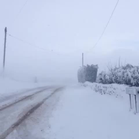 Vine by The Sheffield Honey Company - Blizzard conditions up at the farm still #sheffieldsnow