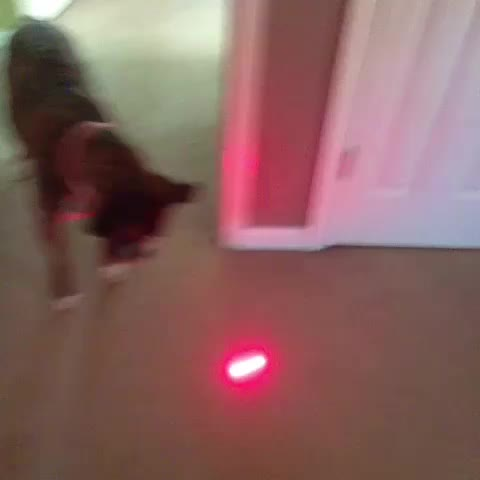Vine by Funny Dogs - She didnt know what to do 😂😂😂💀
