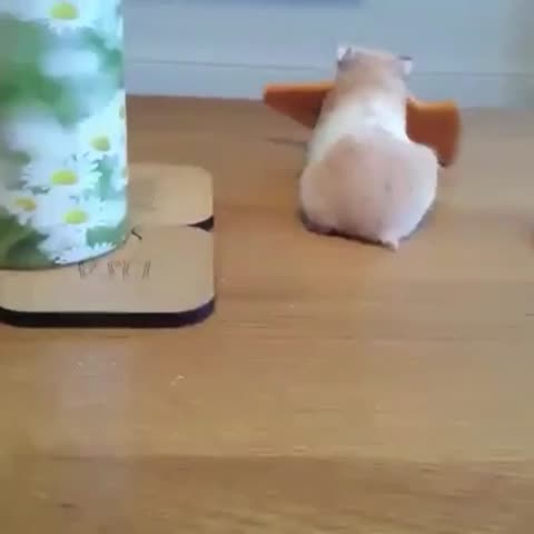 Vine by The LAD Bible - This is mine.