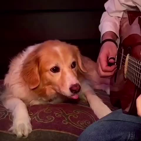 """Vine by Trench - """"I dont want you to leave, will you hold my hand?"""" Stay With Me by SAM SMITH w/ Maple 🐶"""